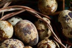 Le uova di quaglia su vecchia superficie di legno marrone con verde hanno offuscato il fondo naturale delle foglie, il fuoco sele fotografia stock