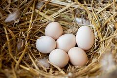Le uova fresche in una paglia annidano - il primo piano Fotografie Stock Libere da Diritti