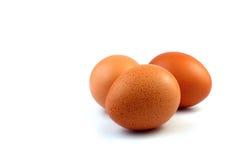 Le uova isolano il fondo bianco Fotografie Stock Libere da Diritti