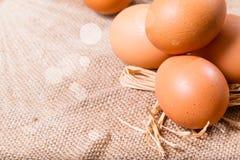 Le uova si sono accese con il sole su un licenziamento Fotografie Stock Libere da Diritti