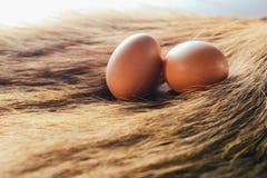 Le uova sono disposte su erba Fotografia Stock