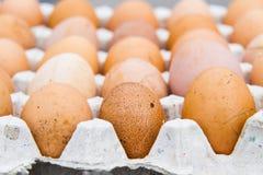 Le uova sono indennità-malattia ed ad alta percentuale proteica Immagini Stock