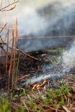 Le ustioni nel parco, tutto dell'erba asciutta è in fumo fotografia stock