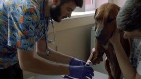 Le vétérinaire colle la patte d'un chien avec la bande écossaise clips vidéos