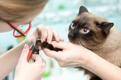 Le vétérinaire a coupé les griffes de chats Photographie stock libre de droits