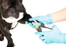 Le vétérinaire coupe les griffes du ` s de chien photos stock