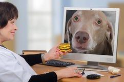 Le vétérinaire de télémédecine donne un hamburger au chien dans le moniteur photo libre de droits