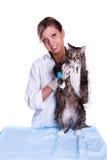 Le vétérinaire ont un examen médical un chat Image stock