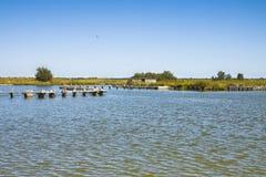 Le valli di Comacchio sono conosciute universalmente per pesca dell'anguilla - citt? di Ferrara di zona protetta dell'Unesco - Em fotografia stock