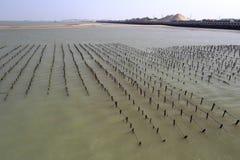 Le varech met en place à la plage de l'île de xiaodeng, porcelaine Photographie stock libre de droits