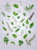 Le varie erbe fresche dal basilico santo del giardino fioriscono, flo del basilico Immagine Stock