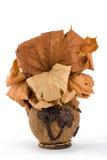 Le vase de la noix de coco Photos stock
