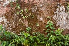 Le vecchi pareti ed alberi Fotografie Stock Libere da Diritti