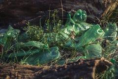 Le vecchie bottiglie di plastica verdi hanno scaricato nell'erba Immagini Stock