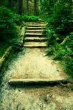 Le vecchie scale di legno in foresta invasa fanno il giardinaggio, sentiero per pedoni turistico Punti dai tronchi tagliati del f fotografie stock