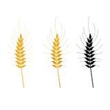 Le vecteur de blé a isolé l'ensemble Photographie stock