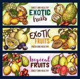 Le vecteur porte des fruits les bannières exotiques de croquis de fruit tropical Photos stock