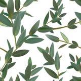 Le vecteur sans couture de modèle de vert de feuille de thym a isolé l'ensemble de feuilles illustration libre de droits