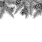 Le vecteur tiré par la main de cône d'arbre et de pin de sapin ajustent le cadre pour l'hiver Images libres de droits