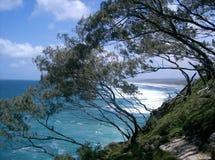 Le vent a balayé des arbres, île de Stradbroke Photo stock