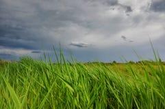 Le vent a balayé l'herbe et le ciel orageux Images libres de droits