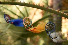 Le vent est balancé par des dreamcatchers colorés suspendus sur une branche de l'usine de Vera d'aloès Photos stock