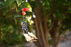 Le vent est développé par le receveur rêveur suspendu sur un arbre Photographie stock