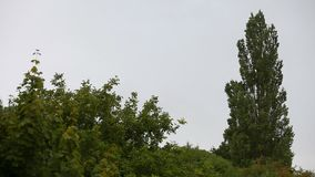 Le vent secoue des branches des arbres banque de vidéos