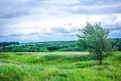 Le vent sur la colline Images libres de droits
