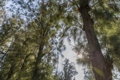 Le ver observe la vue du pin Fusée de lentille de nature Image libre de droits
