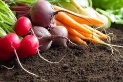 Le verdure crude fresche della molla raccolgono nel concetto organico del fondo del giardino fotografia stock