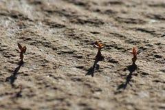 Le verdure dei germogli nell'illusione del deserto arido abbelliscono Immagini Stock