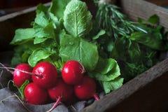 Le verdure fresche del ravanello della molla legano l'alimento vegetariano naturale, stile rustico Fotografie Stock Libere da Diritti
