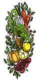 Le verdure hanno isolato gli oggetti sani di vita di progettazione creativa Fotografia Stock