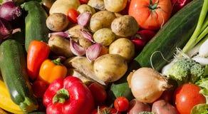 Le verdure hanno sistemato in un gruppo variopinto come natura morta soleggiata Immagine Stock Libera da Diritti