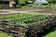 Le verdure sane nella recinzione di recinzione di legno, guarnigione fa il giardinaggio, il Garden di re, Ticonderoga forte, New  Fotografie Stock Libere da Diritti