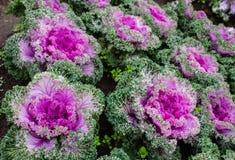 Le verdure variopinte immagini stock