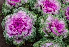 Le verdure variopinte immagini stock libere da diritti