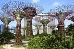 Le verger de Supertree aux jardins par la baie la nuit Ces Supertrees unique sont les jusqu'à 16 magasins grands de hauteur, créé Image libre de droits