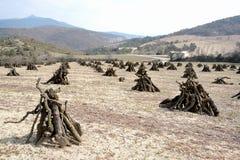 Le verger ressemblant à un camp indien, avec ses arbres fruitiers cutted photographie stock