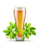Le verre de bière blonde blonde avec l'usine d'houblon bourgeonne Photographie stock libre de droits