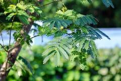 Le vert à la lumière du soleil Images libres de droits