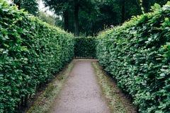Le vert bague le labyrinthe, labyrinthe de haie Images stock