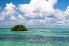 le vert bleu quitte l'océan Photographie stock libre de droits