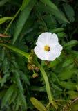Le vert de fleur blanche laisse le fond Photo stock
