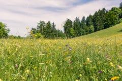 Le vert de Forest Field Grassy Summer Day fleurit la montagne augmentant l'Exp Photos stock