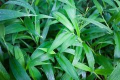 Le vert de jungle laisse le fond d'été dans des tons exotiques Photos libres de droits