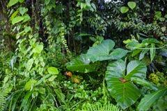 Le vert de jungle laisse le fond d'été dans des tons exotiques Photographie stock libre de droits