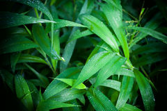 Le vert de jungle laisse le fond d'été dans des tons exotiques Images stock