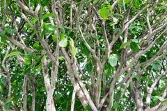 Le vert de nature part sur les branches et les troncs d'arbre détaillés de plan rapproché Image stock